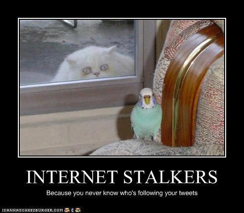 Creepy Stalker Cat Video